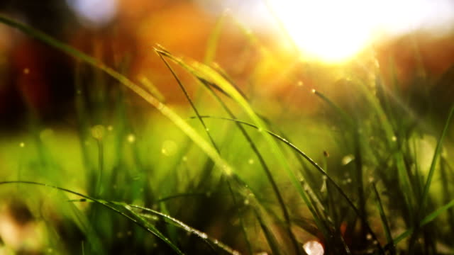 Wild grass with shiny rays video