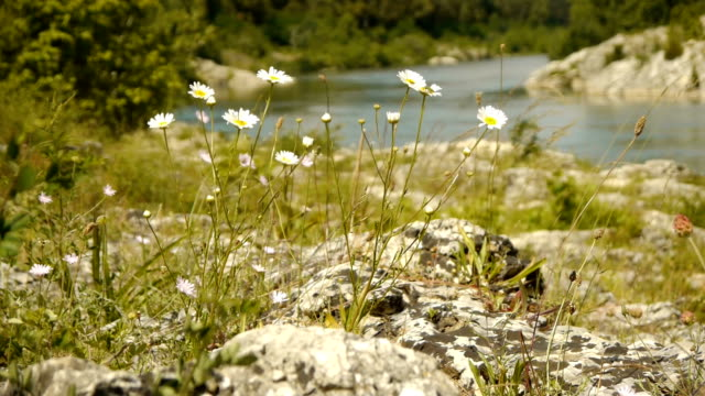 Wild herbs at Gardon river, France video