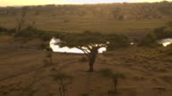 AERIAL: Wild hippos bathing in muddy waterhole river in Africa at golden sunrise video