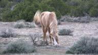 wild horse in wyoming video
