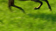 wild horse video