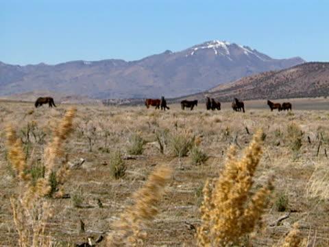 Wild Horses 26 video