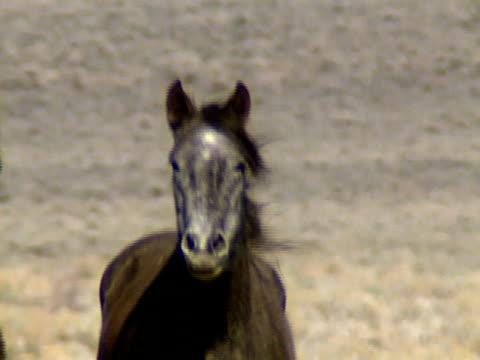 Wild Horses 31 video