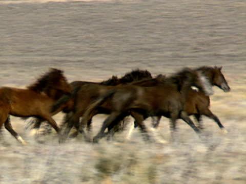 Wild Horses 33 video