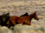 Wild Horses 34 video