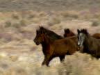 Wild Horses 35 video