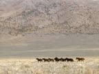 Wild Horses 36 video