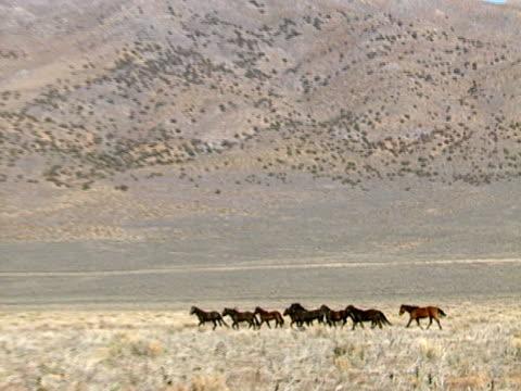 Wild Horses 37 video