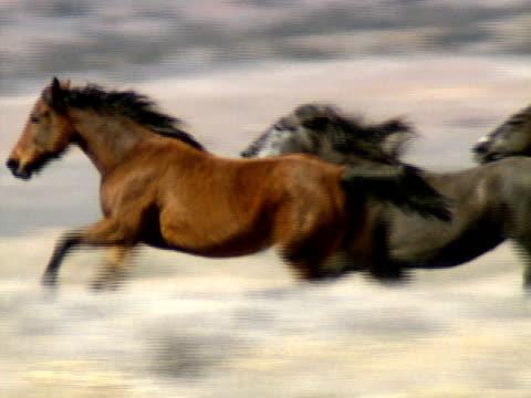 Wild Horses 39 video