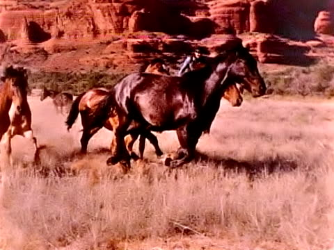 Wild Horses in Slow Motion video