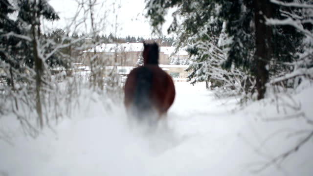 Wild horses in the winter forest video
