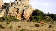 wild horses of sicily video