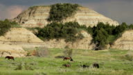 Wild horses Theodore Roosevelt National Park Bandlands North Dakota video