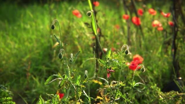 Wild meadow video