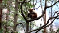 Wild monkey on the tree video