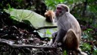 Wild monkey video