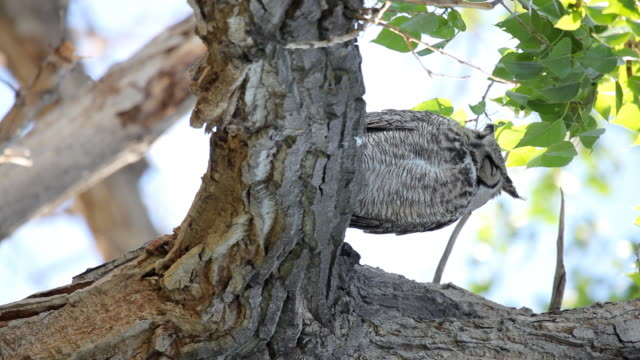 HD wild owl sitting in a tree vertical video