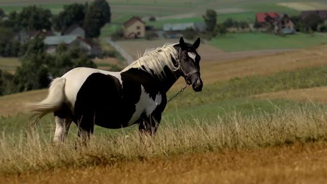 wild pony video