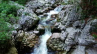 Wild river flows in Alps Mountains, clean blue water and green forest. Triglav National Park, Julian Alps, Bohinj valley, Slovenia. video