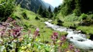 wild stream flowing through Schwarzachtal valley in Tirol /Austria. Zillertal video