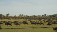 SLOW MOTION: Wildebeest migration video