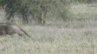 Wildebeest Running video