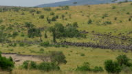 Wildebeest stampede in African Safari video