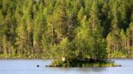 Wilderness lake in Scandinavia video