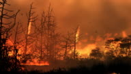 Wildfire HD loop video