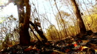 Wildfire in Thailand video