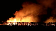 wildfire video