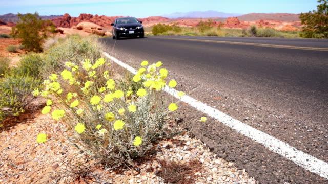 WS Wildflowers by the roadside video