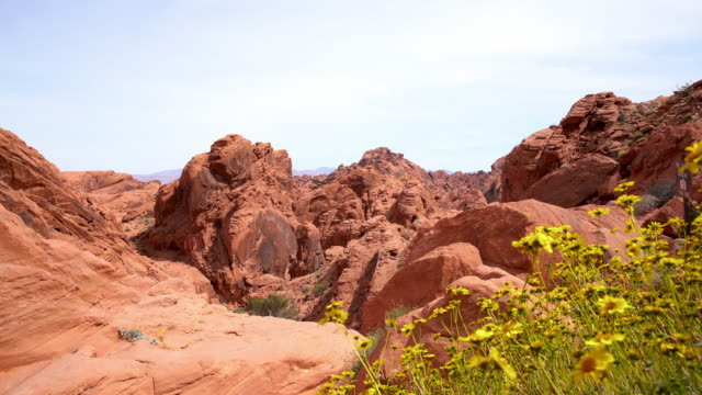 DS Wildflowers in Canyonlands National Park video