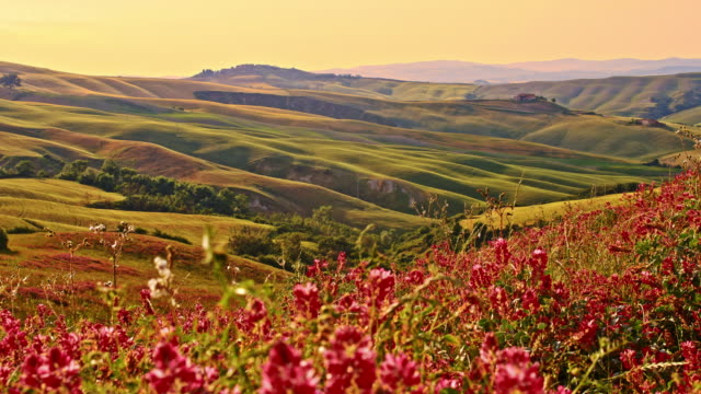 DS Wildflowers in the wind of Tuscan countryside video
