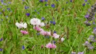 wildflowers near vineyard video