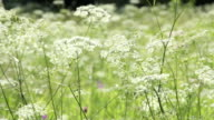 Wildflowers on a sunny day video