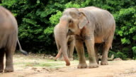 wildlife elephant video