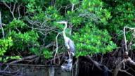 Wildlife in Floridas Everglades video