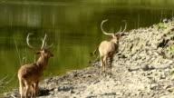 Wildlife in Thailand video