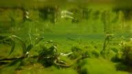 Wildlife underwater video