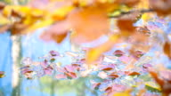 wilted leaves floating on the surface of lake video