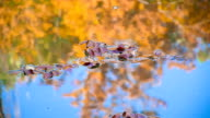 wilted leaves on the lake water video