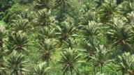 Wind among coconut palms plantation in French Polynesia video