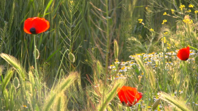 Wind And Flowers video