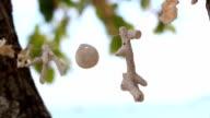 wind chimes seashell video