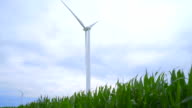 Wind generator on corn field. Panning from green leaves to wind generator video