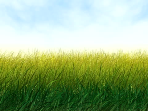 Wind in Grass video