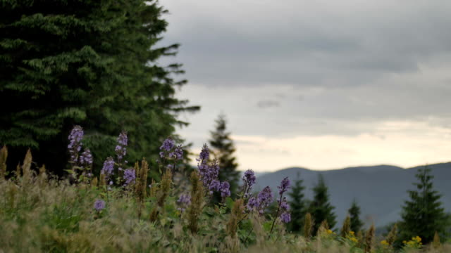 wind shakes the grass and flowers in the mountains video
