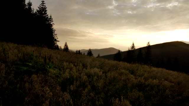 wind shakes the grass in the mountains during a sunset video