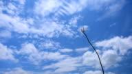 Wind Sky Air video